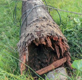 rotted-posts